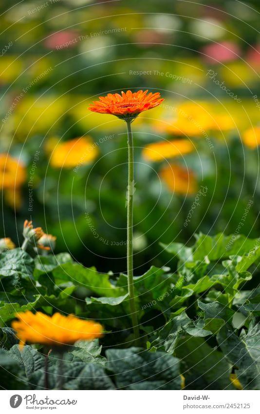 herausstechen Natur Sommer Pflanze schön Landschaft Blume Umwelt Frühling Kunst Garten orange Park Wetter Wachstum Schönes Wetter Blühend