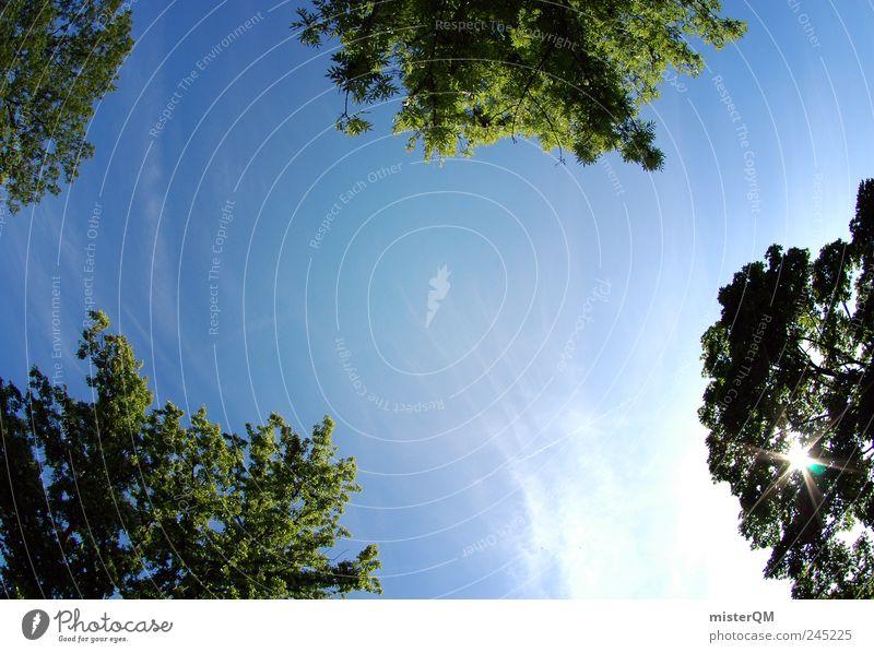 Sommer im Park. Himmel Natur grün blau Pflanze Sonne Freiheit oben Landschaft Umwelt Erde Sonnenenergie Sonnenbad Baumkrone Symmetrie