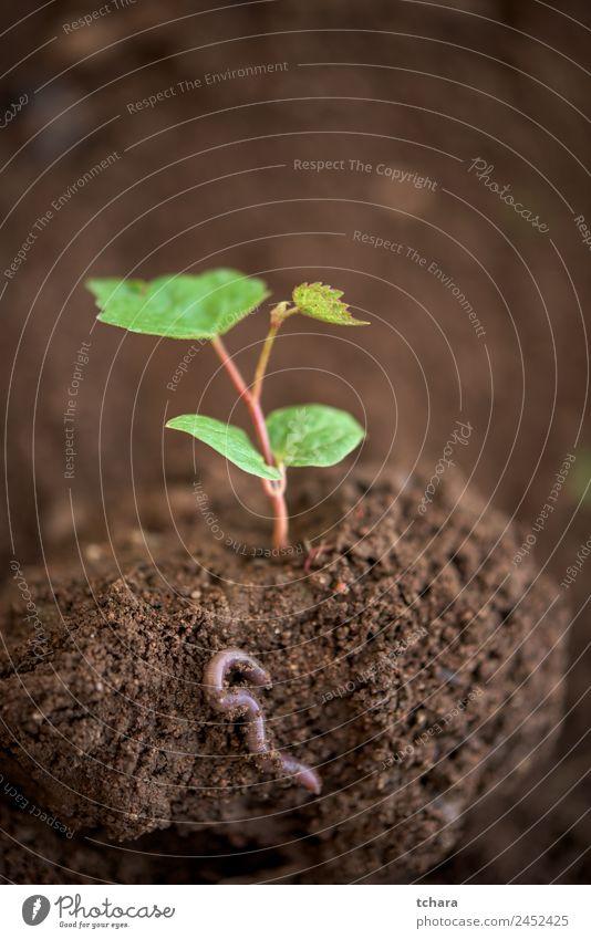 Neues Leben Gemüse Kaffee Geld Garten Gartenarbeit Kapitalwirtschaft Business Umwelt Natur Pflanze Erde Frühling Baum Blatt Wurm Wachstum frisch klein natürlich