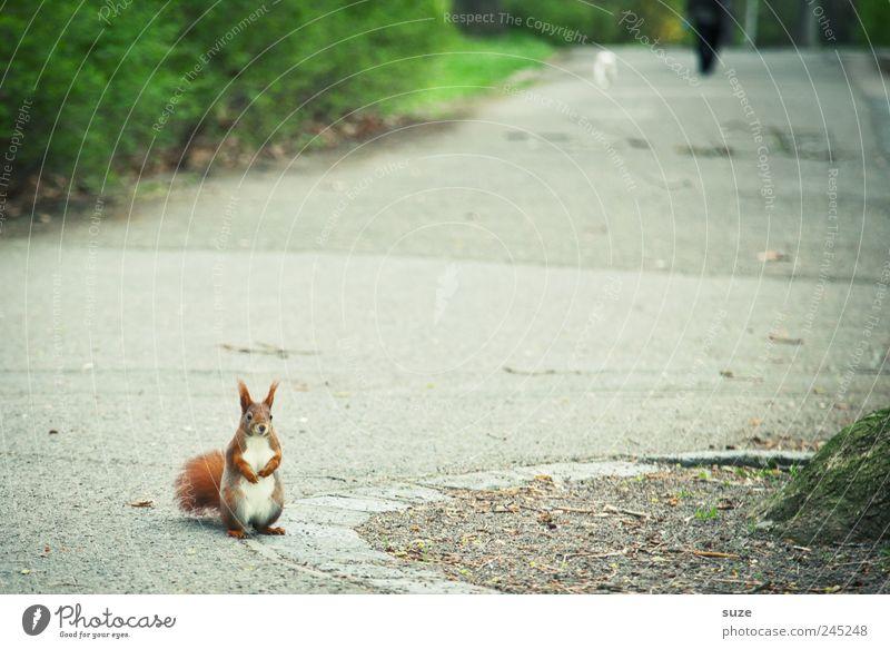 Jetzt bloß kein Rückzieher *schwitz* grün rot Tier Wege & Pfade lustig grau klein natürlich Park Freizeit & Hobby wild sitzen Wildtier Sträucher niedlich