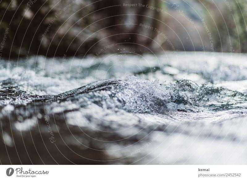 Wasser marsch Lifestyle Leben harmonisch Wohlgefühl Zufriedenheit Sinnesorgane Erholung ruhig Ferien & Urlaub & Reisen Ausflug Abenteuer Freiheit Camping Sommer