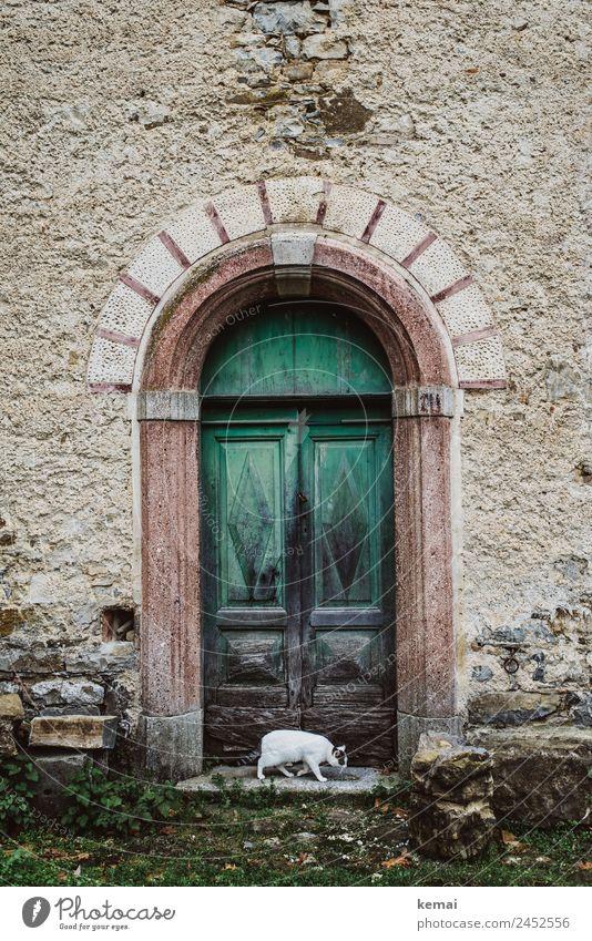 Wilde Katze alt schön grün Erholung Tier ruhig Wand Stil Mauer außergewöhnlich Fassade Häusliches Leben Ausflug gehen Zufriedenheit