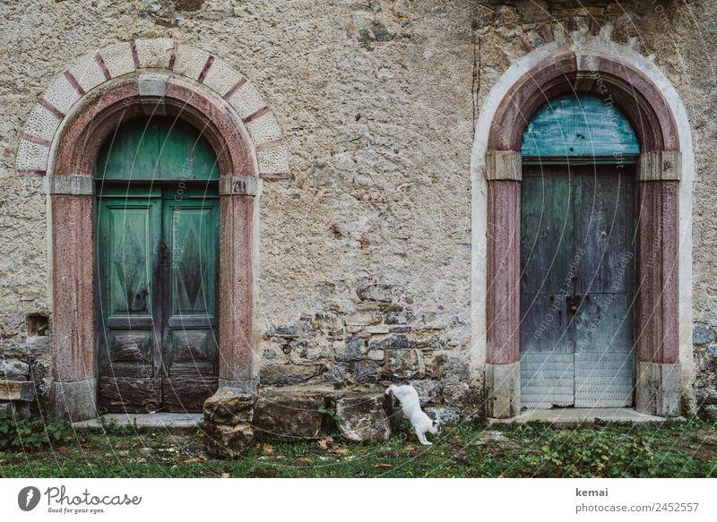 Wilde Katze II Ferien & Urlaub & Reisen alt blau schön grün Erholung Tier ruhig Lifestyle Wand Wiese Mauer Freiheit Fassade Ausflug