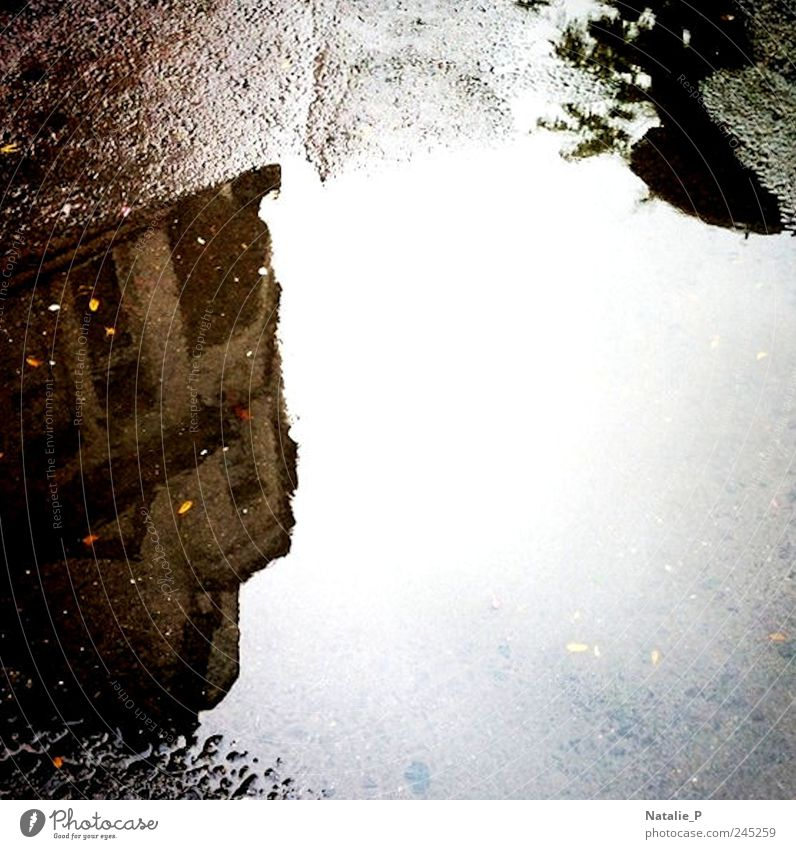 Sichtweise I Wasser schlechtes Wetter Haus nass Traurigkeit Pfütze Gedeckte Farben Außenaufnahme Detailaufnahme Menschenleer Textfreiraum rechts