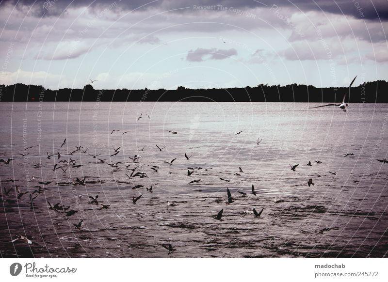 Rostfreier Edelstahl Wasser Klima Sturm Wellen Küste Flussufer Schifffahrt Tier Vogel Flügel Möwe Tiergruppe Schwarm fliegen Fressen kämpfen schreien
