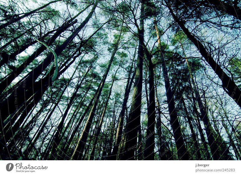 blickwinkel Umwelt Natur Landschaft Pflanze Himmel Sommer Baum Wald außergewöhnlich lang blau braun grün schwarz Laubwald Holz Verzerrung Farbfoto