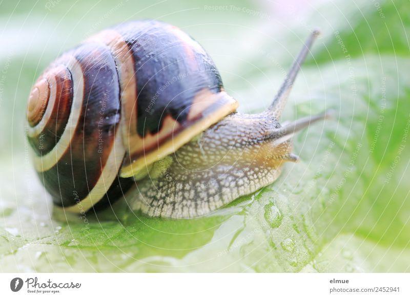 Gartenschnecke XVI Blatt Wildtier Schnecke Schneckenhaus Stielauge Fühler Spirale Schleimer Drehgewinde Rückzug schleimig Willensstärke Mut Tatkraft Schutz
