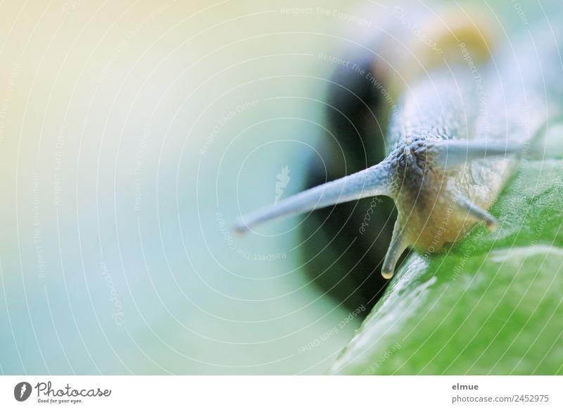 Gartenschnecke II Blatt Wildtier Schnecke Fühler Weichtier Schleimer Kriecher Schleimspur Schneckenhaus gruselig natürlich schleimig Kraft Willensstärke