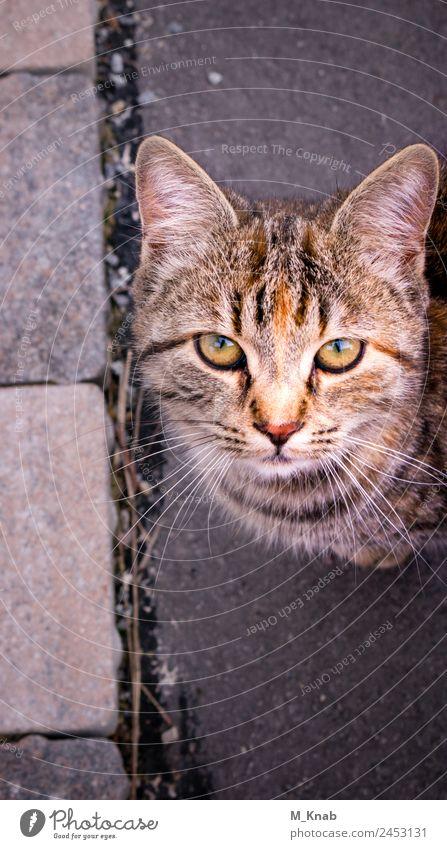 Katze Close-Up Tier Haustier Tiergesicht Fell 1 Tierjunges beobachten berühren Fressen füttern Liebe Blick Spielen toben nah Neugier niedlich schön Wärme Schutz