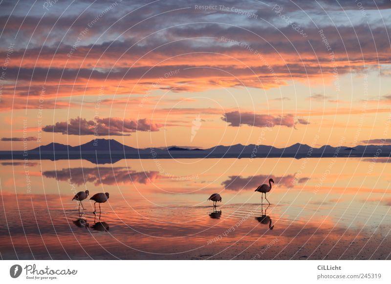 Flamingo Formation II Umwelt Natur Landschaft Wasser Sonnenlicht Wüste Tier Wildtier 4 Tiergruppe ästhetisch authentisch außergewöhnlich mehrfarbig gelb rosa