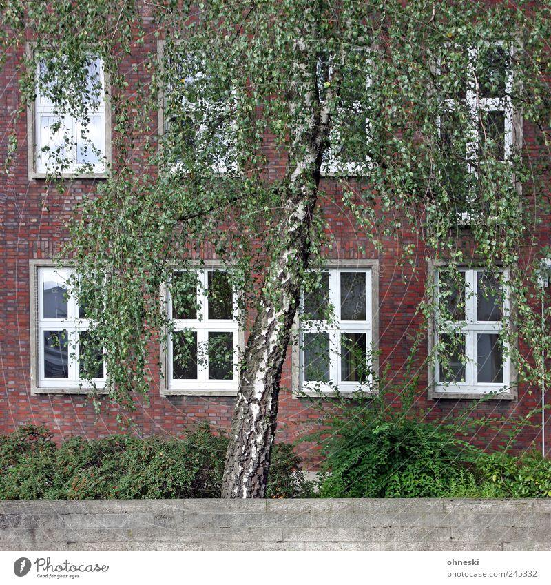 Ein Haus im Grünen grün Baum Haus Wand Fenster Mauer Gebäude Fassade Wachstum Sträucher Bauwerk Grünpflanze Birke