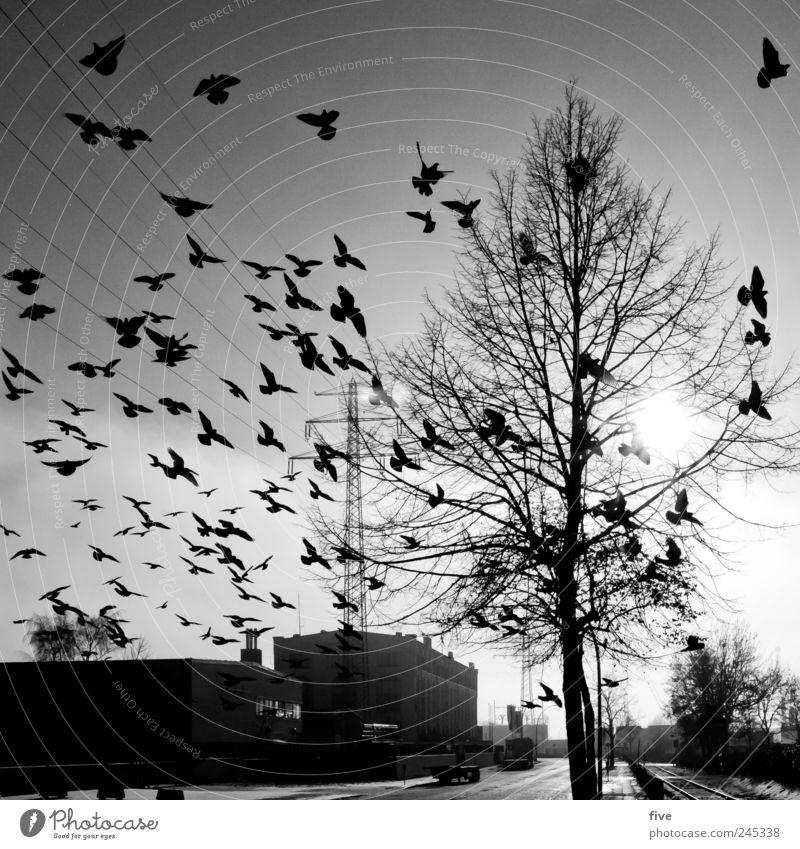 Die Vögel Ferien & Urlaub & Reisen Ausflug Sightseeing Natur Himmel Wolkenloser Himmel Sonne Schönes Wetter Pflanze Baum Hafenstadt Stadtrand Menschenleer Haus