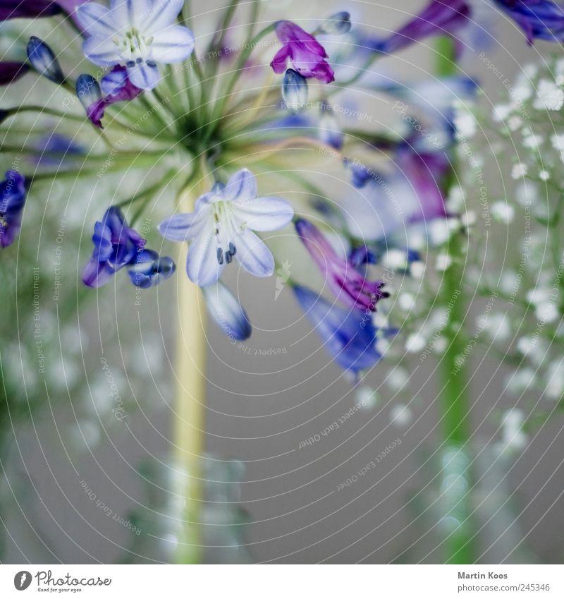 blaue blume elegant Stil Design Leben harmonisch Wohlgefühl Sinnesorgane Natur Pflanze Blume Wachstum Zufriedenheit Lebensfreude Frühlingsgefühle Sympathie