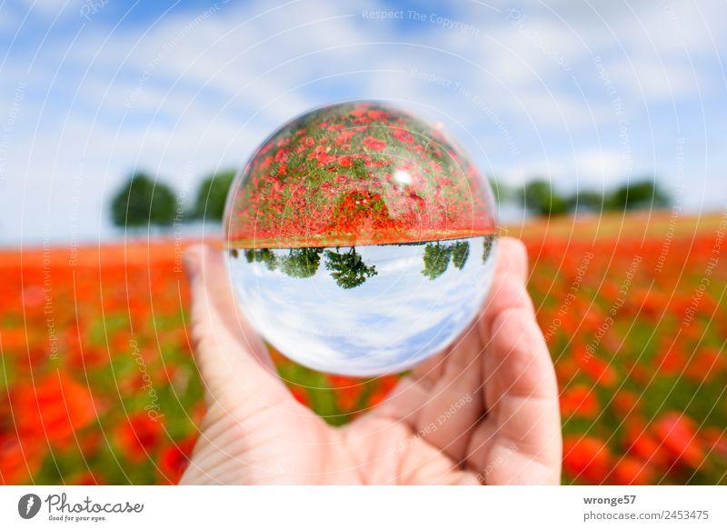 Verkehrte Welt | mehr Mohn Natur Landschaft Pflanze Himmel Horizont Sommer Baum Nutzpflanze Feld Unendlichkeit Kitsch rund schön blau mehrfarbig grün rot