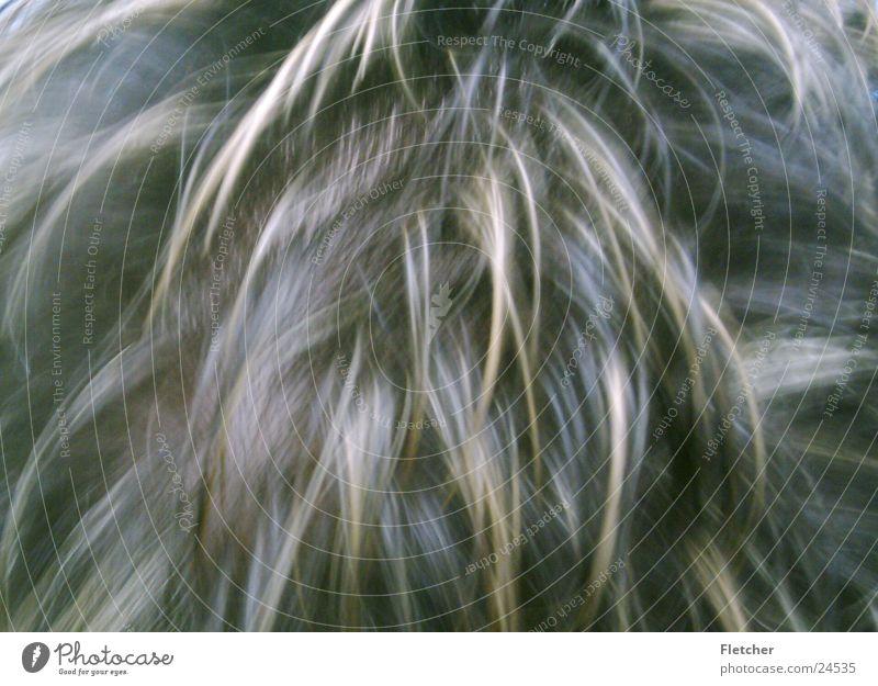 Haare Haarsträhne Fell Haarschopf Haare & Frisuren blond dunkel braun Mann Haarpracht