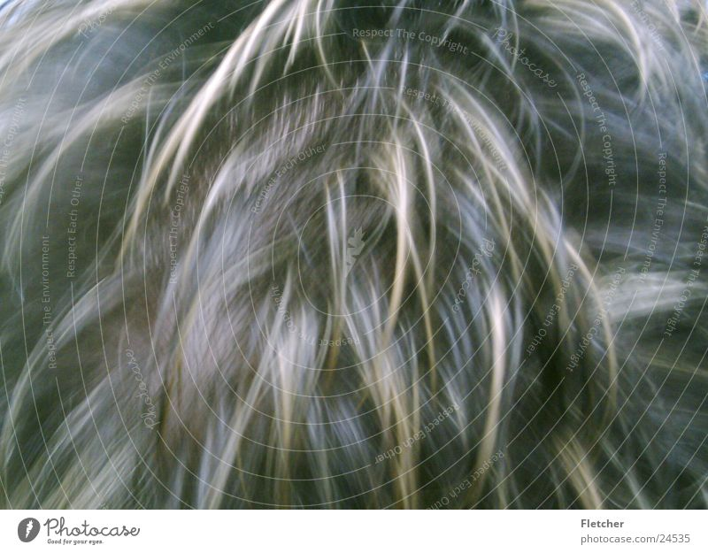 Haare Mann dunkel Haare & Frisuren braun blond Fell Haarsträhne Haarschopf