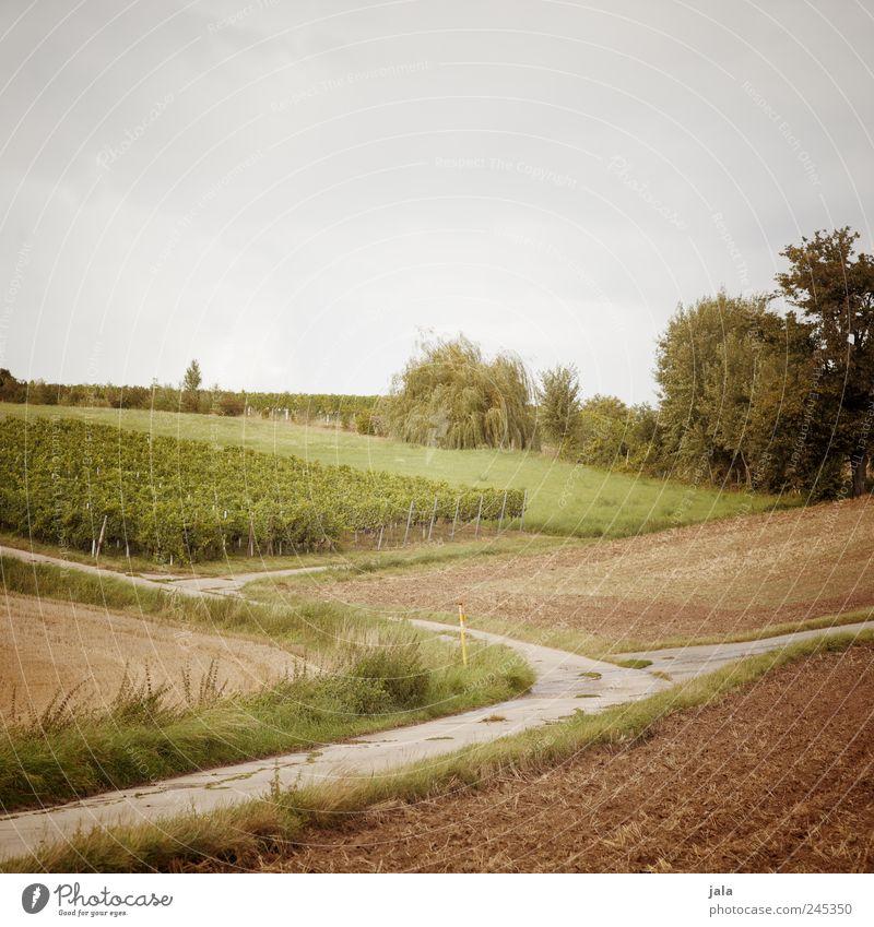 ackerland Himmel Natur Baum grün blau Pflanze Wiese Gras Landschaft Umwelt braun Feld Sträucher natürlich Landwirtschaft Forstwirtschaft
