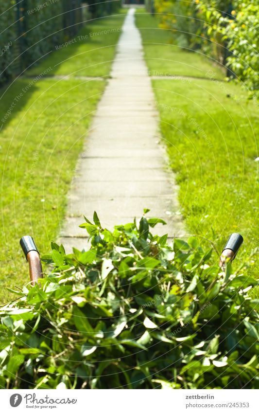 Heckenschnitt Natur Pflanze Sommer Blatt Arbeit & Erwerbstätigkeit Blüte Garten Landschaft Wege & Pfade Umwelt Wachstum Dienstleistungsgewerbe Gartenarbeit