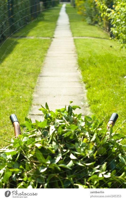 Heckenschnitt Natur Pflanze Sommer Blatt Arbeit & Erwerbstätigkeit Blüte Garten Landschaft Wege & Pfade Umwelt Wachstum Dienstleistungsgewerbe Gartenarbeit Schönes Wetter gerade Haufen