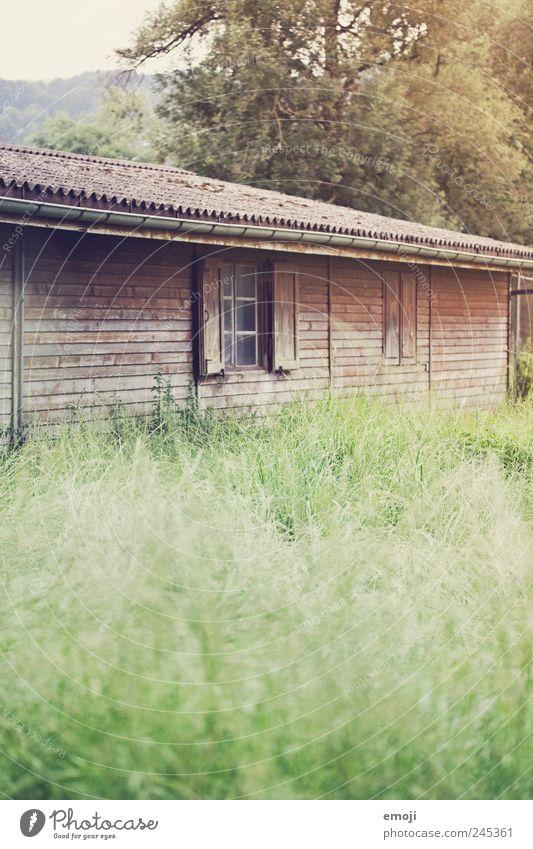 Märchen Natur Gras Wiese Hütte Fenster alt Holzbrett Holzhaus natürlich Farbfoto Außenaufnahme Menschenleer Textfreiraum unten Tag Schwache Tiefenschärfe