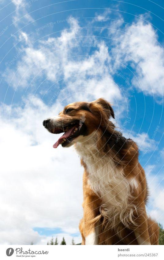 dOgsday Natur Tier Freiheit Hund atmen Haustier