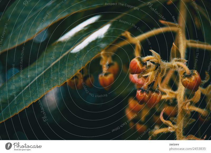 Natur Sommer Pflanze Farbe schön grün Baum Blume rot Blatt Wald dunkel gelb Umwelt Blüte natürlich