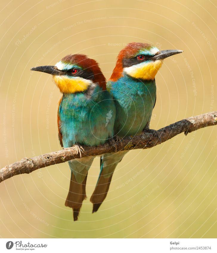 Natur blau schön Farbe grün weiß Tier schwarz Essen Umwelt Liebe Paar Vogel wild Feder Lebewesen