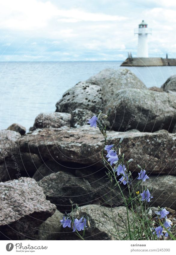 Freiheit Natur Landschaft Pflanze Himmel Wolken Frühling Blume Gras Blatt Blüte Grünpflanze Felsen Wellen Küste Seeufer Stein Wasser Ferne frei Freundlichkeit
