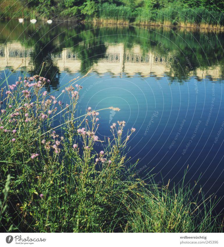 Letzten Sommer... Natur Landschaft Pflanze Wasser Gras Sträucher Wildpflanze Seeufer Flussufer Kanal Fassade blau Erholung Idylle ruhig friedlich deutlich