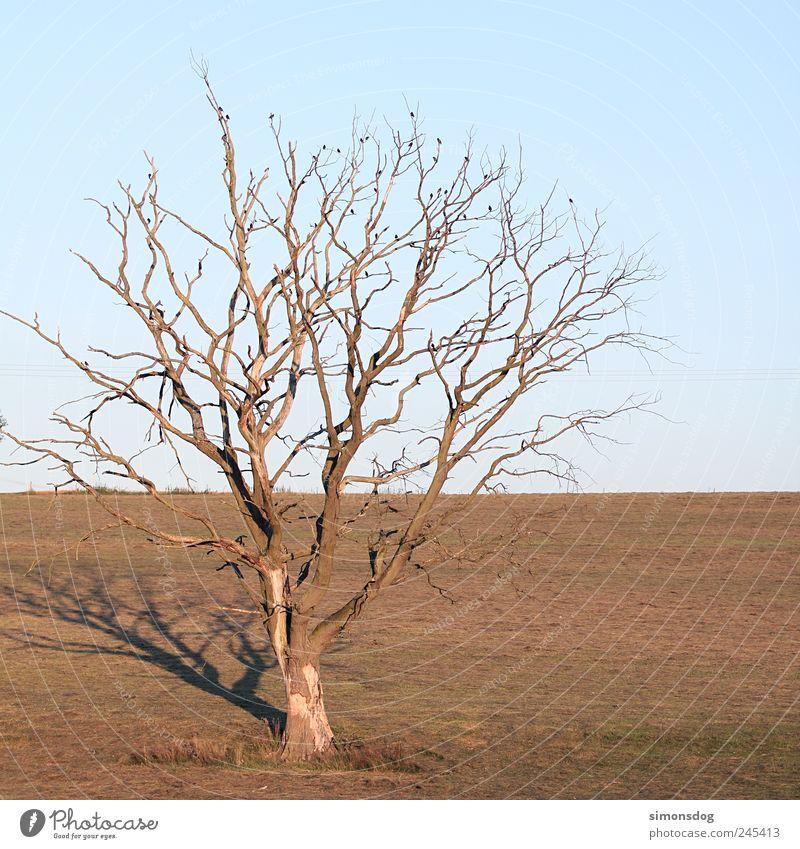 baum Natur alt Baum Pflanze Sommer Einsamkeit Tier Herbst Tod Umwelt Wärme Vogel Horizont einzigartig Vergänglichkeit Ast