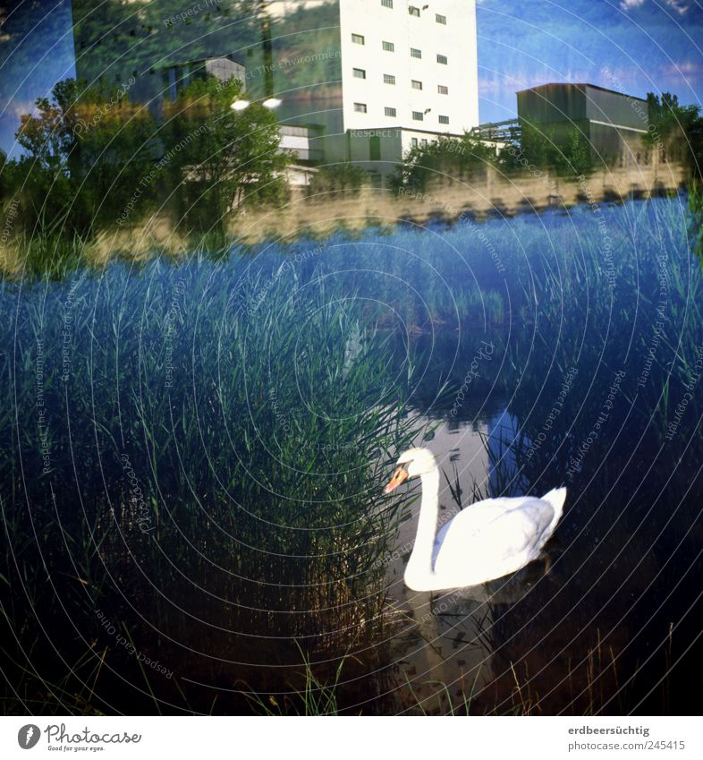 Je voulais toujours... Sommer Natur Landschaft Wasser Sträucher Wildpflanze Schilfrohr Fluss Kanal Industrieanlage Fabrik Hafen Gebäude Vogel Schwan
