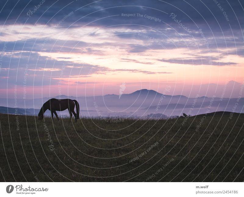Silent morning Natur Sommer Landschaft rot ruhig Berge u. Gebirge natürlich Wiese rosa wild träumen Nebel ästhetisch Abenteuer genießen Beginn