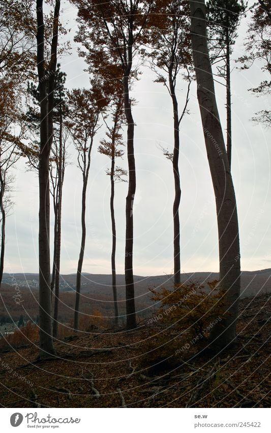 Waldskelett Himmel Wolken Herbst Wetter Baum Blatt Laubwald Aussicht Hügel Berge u. Gebirge Wienerwald wandern dunkel braun grau ruhig Einsamkeit Farbfoto