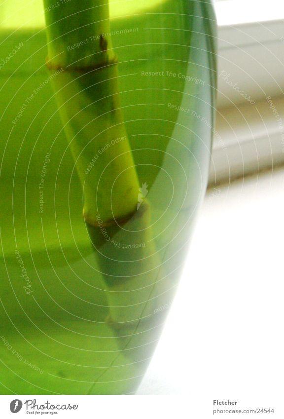 Vase grün Pflanze rund Häusliches Leben durchsichtig Hälfte Topf