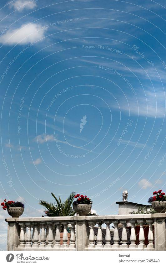 Mediterraner Hauch Himmel Wolken Schönes Wetter Pflanze Blume Blatt Blüte Topfpflanze Traumhaus Villa Balkon Terrasse Geländer Statue Löwe Blumentopf Stein
