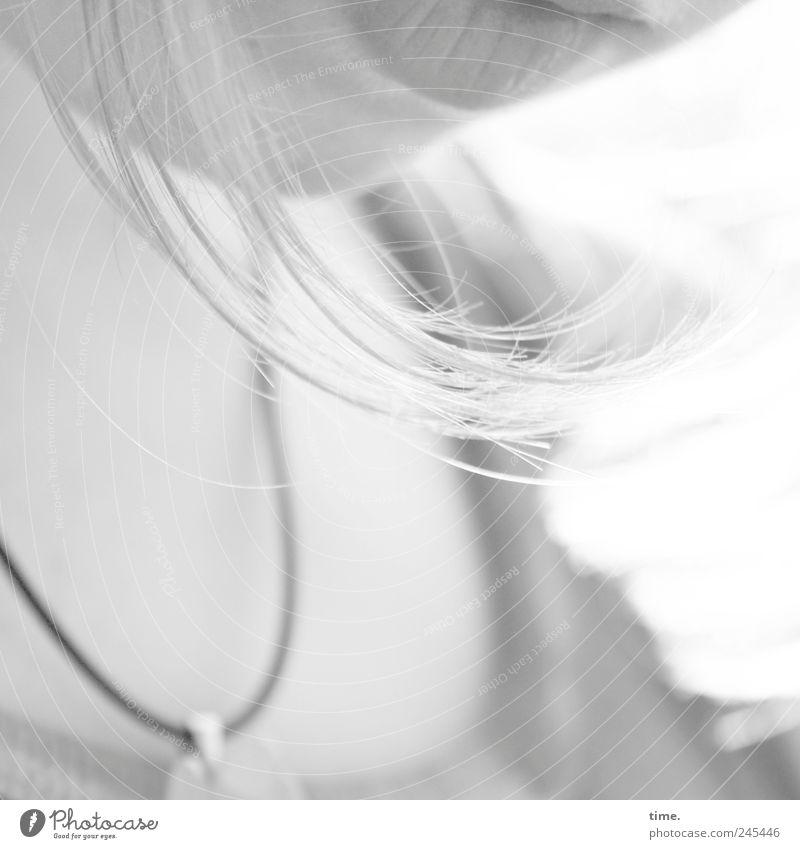 versunken schön Haare & Frisuren ruhig feminin Junge Frau Jugendliche Mund 1 Mensch T-Shirt Halskette blond langhaarig Denken Traurigkeit Willensstärke