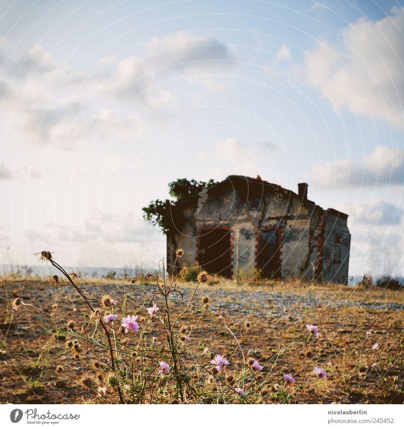 Haus am Meer Natur Pflanze Wolken Schönes Wetter Gras Hügel Küste Seeufer Stein Sand Beton Backstein alt dunkel hässlich kaputt natürlich trist wild Fernweh