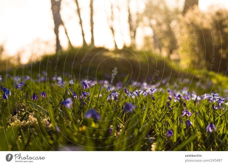 Frühling Natur Pflanze Ferien & Urlaub & Reisen Ferne Wiese Freiheit Landschaft Umwelt Garten Frühling Park Wetter Freizeit & Hobby Ausflug Tourismus Wachstum