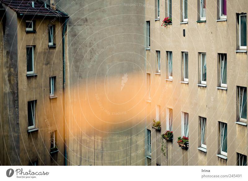 Bochum - grau aber sexy Stadt Blume Wand Fenster Blüte Gebäude Beton trist trashig Hinterhof Blumenkasten