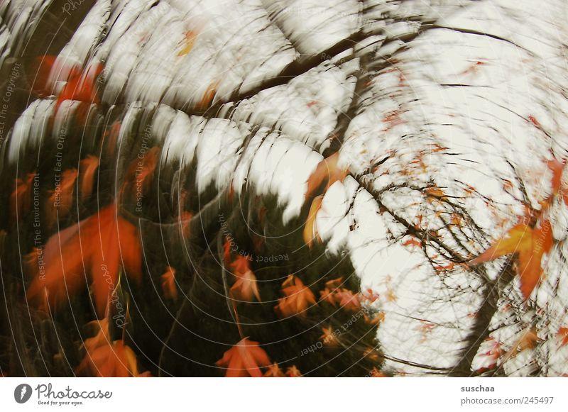 bald ... Natur Himmel Herbst Sturm Baum Park außergewöhnlich rot Bewegung Kunst Umwelt drehen Rotation Strudel rund Blätter Ast Blatt Farbfoto mehrfarbig