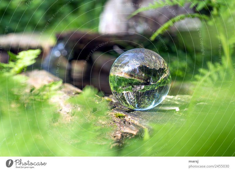 verkehrte Welt | wenn sogar das Wasser hinauf fließt Leben harmonisch Meditation Frühling Pflanze Farn Brunnen Glaskugel grün Frühlingsgefühle Vorfreude