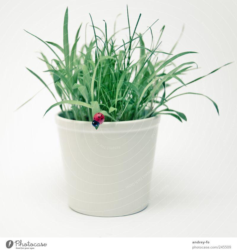 Blumentopf mit Marienkäfer Pflanze Gras Grünpflanze Topfpflanze einfach schön grün weiß Design Glück grasgrün Käfer künstlich Glücksbringer hell 1