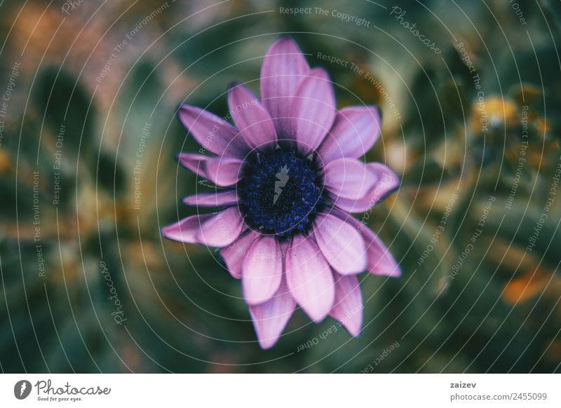 Natur Sommer Pflanze Farbe grün Blume Einsamkeit Blatt Wald dunkel Umwelt Blüte natürlich Wiese Garten rosa