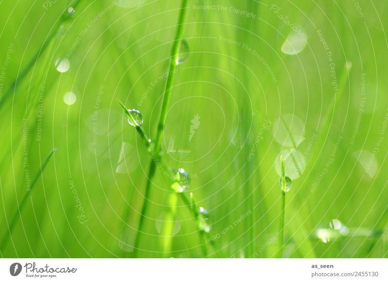 Tanz der Tropfen Lifestyle Wellness Leben harmonisch Spa Garten Umwelt Natur Pflanze Wasser Wassertropfen Frühling Sommer Klima Regen Gras Grünpflanze berühren