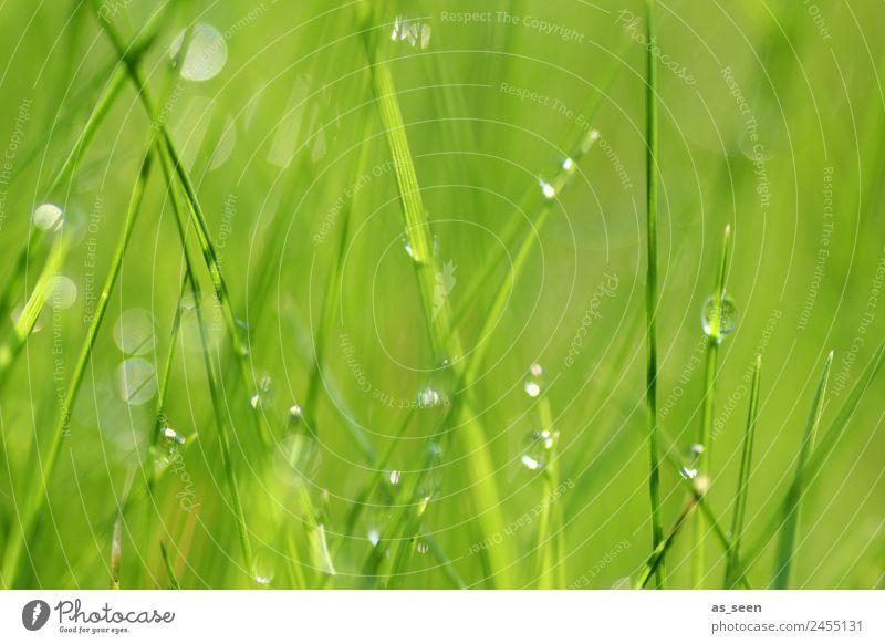 Glasperlenspiel Wellness Leben harmonisch Sinnesorgane Spa Garten Umwelt Natur Pflanze Wasser Wassertropfen Frühling Sommer Klima Regen Gras Wiese glänzend