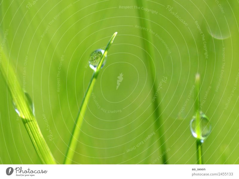 Dreiklang Lifestyle Wellness Leben harmonisch Kur Spa Umwelt Natur Pflanze Wasser Wassertropfen Frühling Sommer Regen berühren glänzend hängen Wachstum