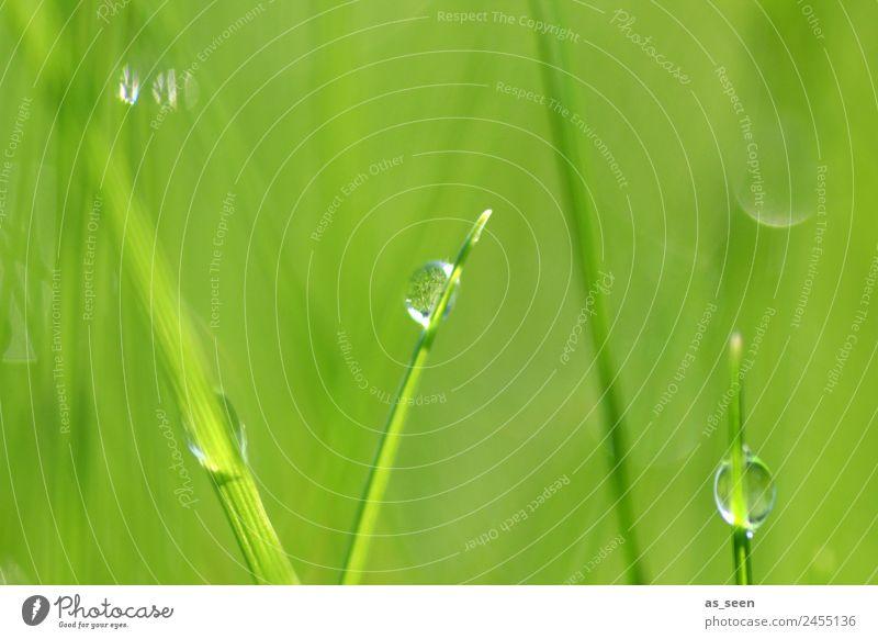 Morgenfrische Wellness Leben harmonisch Sinnesorgane Spa Garten Umwelt Natur Pflanze Wasser Wassertropfen Frühling Sommer Regen Gras Blatt Halm Park Wiese