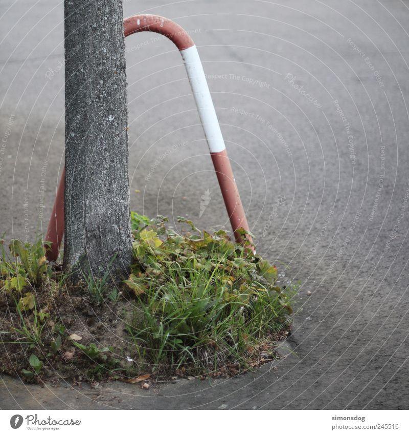 naturschutz Natur Baum Pflanze Blatt Erholung Straße Umwelt Gras Wege & Pfade Kraft dreckig Verkehr Wachstum planen trist Wandel & Veränderung