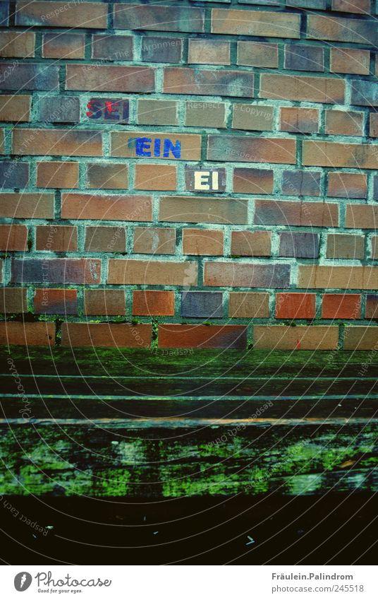 Sei ein Ei. Koch Anstreicher Kunst Maler Kunstwerk schlechtes Wetter Regen Gebäude Mauer Wand Stein Holz Backstein alt dunkel eckig kaputt nass blau braun grün
