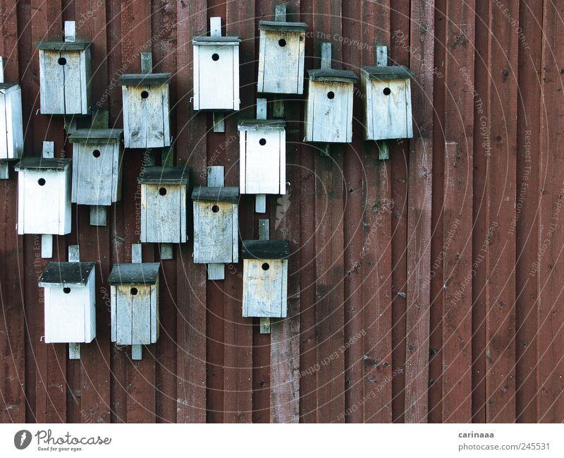 Vogelhäuschen Natur blau weiß rot Sommer Tier schwarz Erholung Landschaft Holz grau braun schlafen Wachstum neu